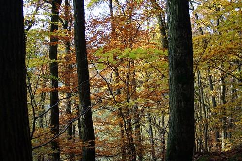 Burg Eltz Nature Trail