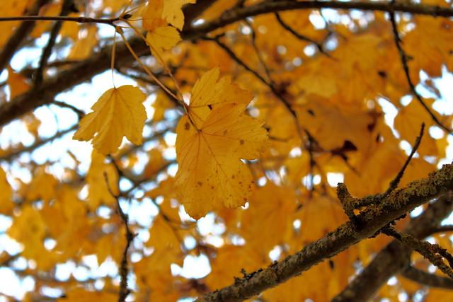 Feuilles à l'automne