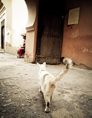 Aguador (PO) Tags: cat gato marrakesh costumbres marruecos tradicion aguador