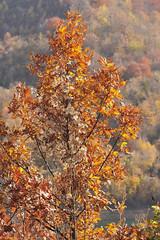 Kosovo autumn, north of Mitrovica, November 7, 2010 (Ivan S. Abrams) Tags: ivansabrams abramsandmcdanielinternationallawandeconomicdiplomacy ivansabramsarizonaattorney ivansabramsbauniversityofpittsburghjduniversityofpittsburghllmuniversityofarizonainternationallawyer