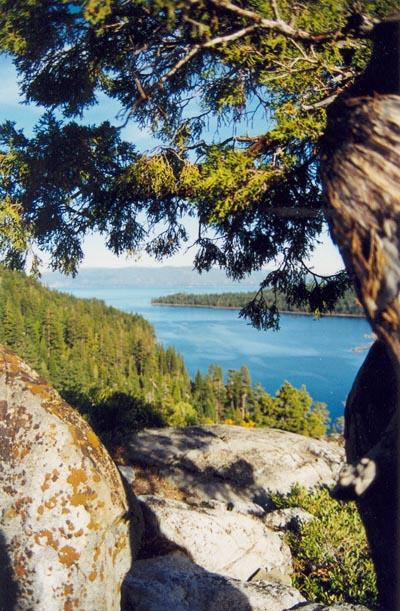 Bristlecone Pine Lake Tahoe 2001 (2)
