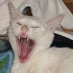 demon-cat-2.jpg