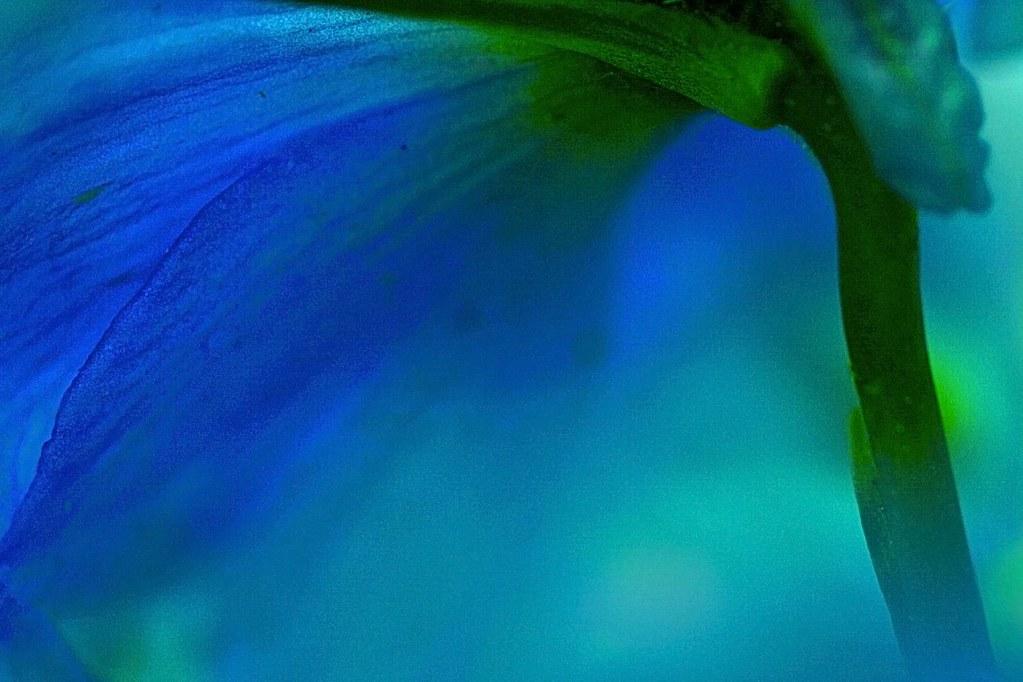 blue ©2007 RosebudPenfold