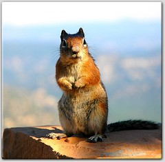 Squirrel at Bryce Canyon National Park, Utah (picazam) Tags: flowers wild elephant flower water grass leaves animal butterfly landscape squirrel dragonfly seal