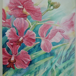 Orchid Series thumbnail