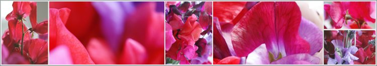 sweet peas collage