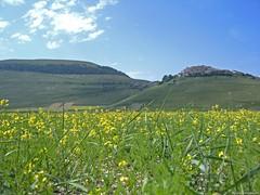 Castelluccio di Norcia: fioritura - panorama (Babj) Tags: fiori montagna umbria norcia fioritura castellucciodinorcia