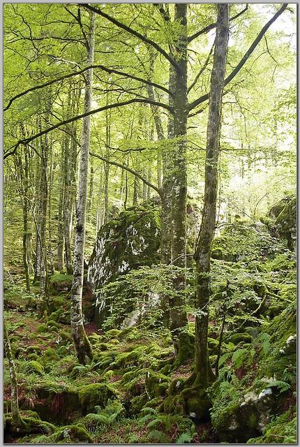 163.- Bosque del Monte Agüera, en el cauce del río Samedón.