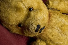 Close up (henx fotojam) Tags: bear red toy teddy 1954