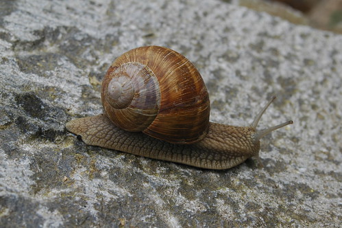 Snail by Raphael Quinet, on Flickr