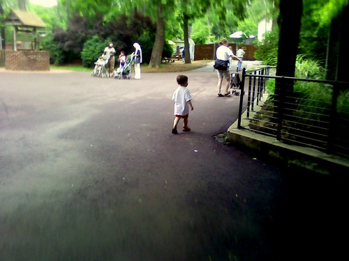 Zeke walking, Elmwood Park Zoo
