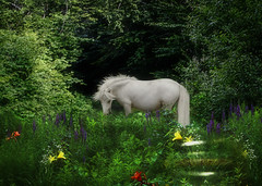 Dorser Hunter-Jumper pony... (Isabelle Ann) Tags: summer horse art digital caballo cheval jumping photographer digitalart fantasy isabelle jumper hunter magical cavallo cavalo pferd equine equus paard horseshows hunterjumper mostbeautiful manchestervt dorsetvt equineart vermontsummerfestival isabelleann isabelleanngreen impressedbeauty equestrianart hunterjumpers dorsetsummerfestival dorsethunterjumpervermont festivalvermontisabelleanngreenequine equinephotographer hunterjumpershows artistichorse isabellegreen equitationart hunterjumperart dorsethorseshow hunterjumperphotography hunterjumprphotographer isabellegreenphotography isabelleannphotography isabelleannhorses mostbeautifulhorses equineartist hunterjumperphotographer hunterjumperphotograhy