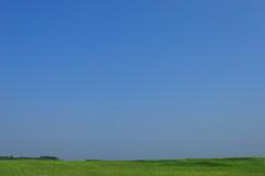 夏日の空と草