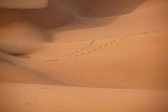 en route... (Maggie's World ...) Tags: china friendship desert together timeless quotation eternal enroute footprintsinthesand ningxia bahaullah hiddenwords shapotou spiritualpath