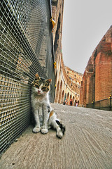 Coloseo Cat (` Toshio ') Tags: people italy rome roma building history animal architecture cat ancient kitten europe italia roman kitty colloseum europeanunion coloseum toshio coloseo aplusphoto superhearts
