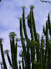 Koko Head Botantical Gardens (coconut wireless) Tags: flowers trees plants gardens agriculture botanicalgardens kokohead