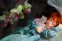 Fairy Baby (harlowkitty) Tags: bjd freckles sa msd balljointeddoll closedeye iplehouse iplehouseamy