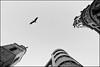 La envidia del Fenix (Haciendo clack) Tags: blackandwhite españa blancoynegro digital canon lafotodelasemana eos reflex spain europa europe tokina1224 valladolid cielo cruce cigüeña 2007 castillayleón callesantiago haciendoclack 400d abigfave canon400d ltytr2 ltytr1 ltytr3 superlativas lfs062007 jesúsgonzálezlópez