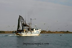 Shrimpboat buzz_Intercoastal Canal