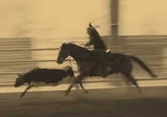 MDSC_2972178 (dany1958ar) Tags: horses western cavalli roping