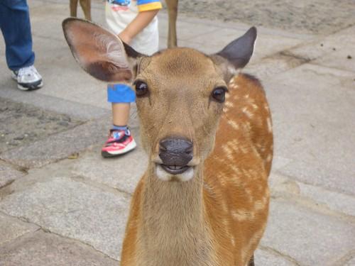 I'm a cute deer