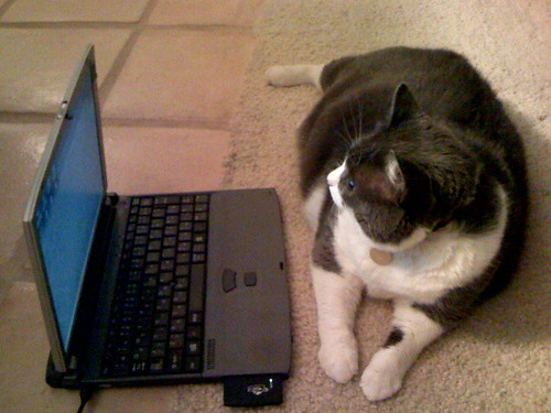 Musu working on PC