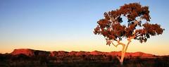 treegohst1586 (claypanpete) Tags: red tree gum landscape desert ghost australia center outback kingscanyon 15challengeswinner