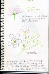 nature journal tracing