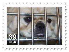 stamp created by using Flickr Toys- USA STAMP (Frozen in Time photos by Marianne AWAY OFF/ON) Tags: dogs puppy fdsflickrtoys puppies stamps trophy winners fbi allgodscreatures specialeffects allanimals animalphotography framedphotos mywinners nationalgeographicwannabes mywinnerstrophy createdbyusingflickrtoys imagescreatedwiththeuseoffdsflickrtoys elpasojoesplace 4leggedfurryfriends favoritesbyinterestingness dogsfavorites stampedphotos ~petsflickrtoys~ nationalgeographiswannabes