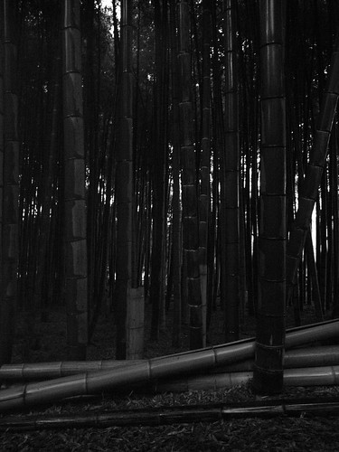 Bamboo thicket