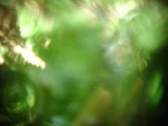Abstractions naturelles n°DSC08988 (au fin fond de l'écran) Tags: wallpaper nature garden photo perception lumière background jardin plan vert trouble vision abstraction essence monde ballade fond écrans bois verdure verre décran loupe abstrait arrière lentille prisme écologie wikka naturel autre végétaux végétale lomographie floues sphère différent chamanique expérimentales découverté