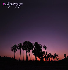 Crescent city (Yousif Aljohar) Tags: city sunset moon silhouette star palm crescent explore     flickraward