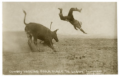 f_flyingcowboy (ricksoloway) Tags: cowboys photohistory foundphotos photographica thewest rppc phototrouvee realphotopostcards vintageanimals thegreatamericanwest vintagecowboys westernanimals
