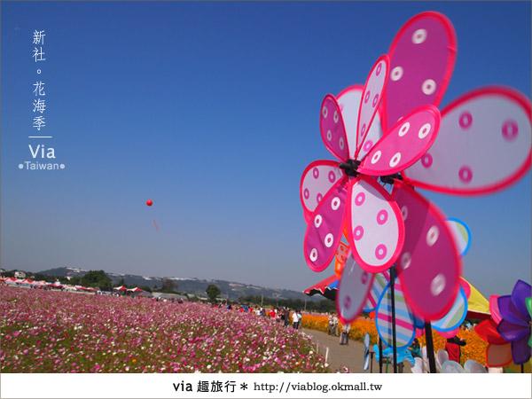 【2010新社花海】via帶大家欣賞全台最美的花海!31