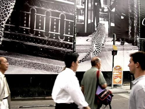 DSCN2203© fatima ribeiro2003