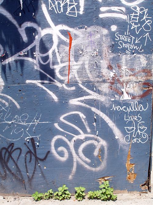 Graffiti Flora