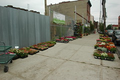 Chelsea Garden Center, Red Hook