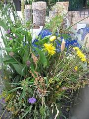Fourme d'Ambert et bouquet de plantes et de fleurs sauvages