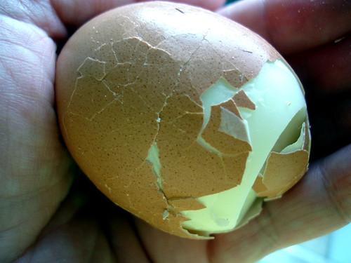 Egg Cracks