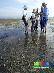 TeamSeagrass at Cyrene Mar 07 (wildsingapore) Tags: singapore seagrass teamseagrass