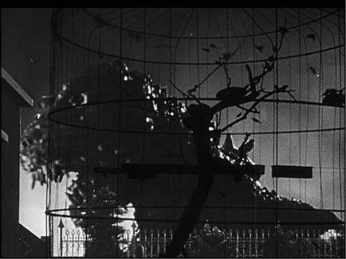 c gojira and bird cage.jpg