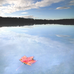 Silentium (Martin Gommel) Tags: blue trees red sky white lake colour water up clouds germany landscape deutschland freedom leaf still quiet peace dof release free grace sharp depthoffield silence blau hush landschaft bume baum loose shut freeborn freiheit freed liberated liberate ruhe secrecy schweigen unbound unrestricted unabhngigkeit stumm emancipated freesoil noblackandwhite quieten unloose unconstrained unconfined unrestrained lautlos funkstille muteness unhampered unloosen badnerland unimprisoned geruschlosigkeit lautlosigkeit ungebundenheit ungezwungenheit tonlos secretiveness slaveless nonslave