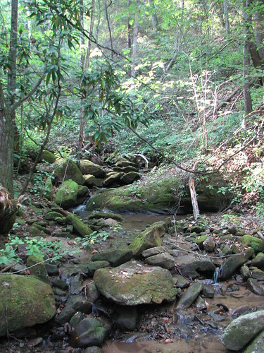 grassy creek above the tuckaseegee