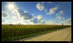 Backroads (Loopsta) Tags: sky ontario canada field corn cornfield naturesfinest supershot