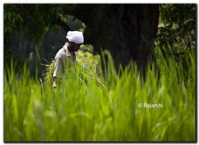 Green by Rajarshi