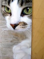 Palumita (Palumita) Tags: cat gato gat 2007 catportraits cattus 10faves commentonmycuteness kissablekat bestofcats flickrhearts palumita thebiggestgroupwithonlycats