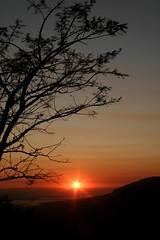 Sunrise over the Umgeni Valley One (Morcom Family) Tags: wild sunrise southafrica mark zebra rsa kwazulunatal kzn morcom umgenivalley aloa