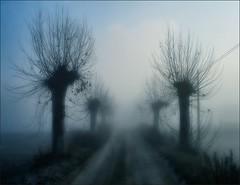One way (Ferran.) Tags: nature fog way natura catalonia osona boira camins superbmasterpiece goldstaraward