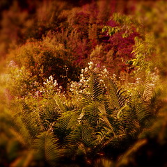 Questions/story of my wild river to my ego! (2) (Denis Collette...!!!) Tags: life flowers canada art nature fleurs ego photography photo bravo thought photographie view emotion faith rivire desire reflet vision thoughts human illusion photograph qubec views difference question