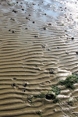 Winkle Dozer (3 June 2007) (© Robert Howe) Tags: greatbritain sea england stilllife beach sand unitedkingdom britain beachlife hampshire solent ripples winkle howwearenow
